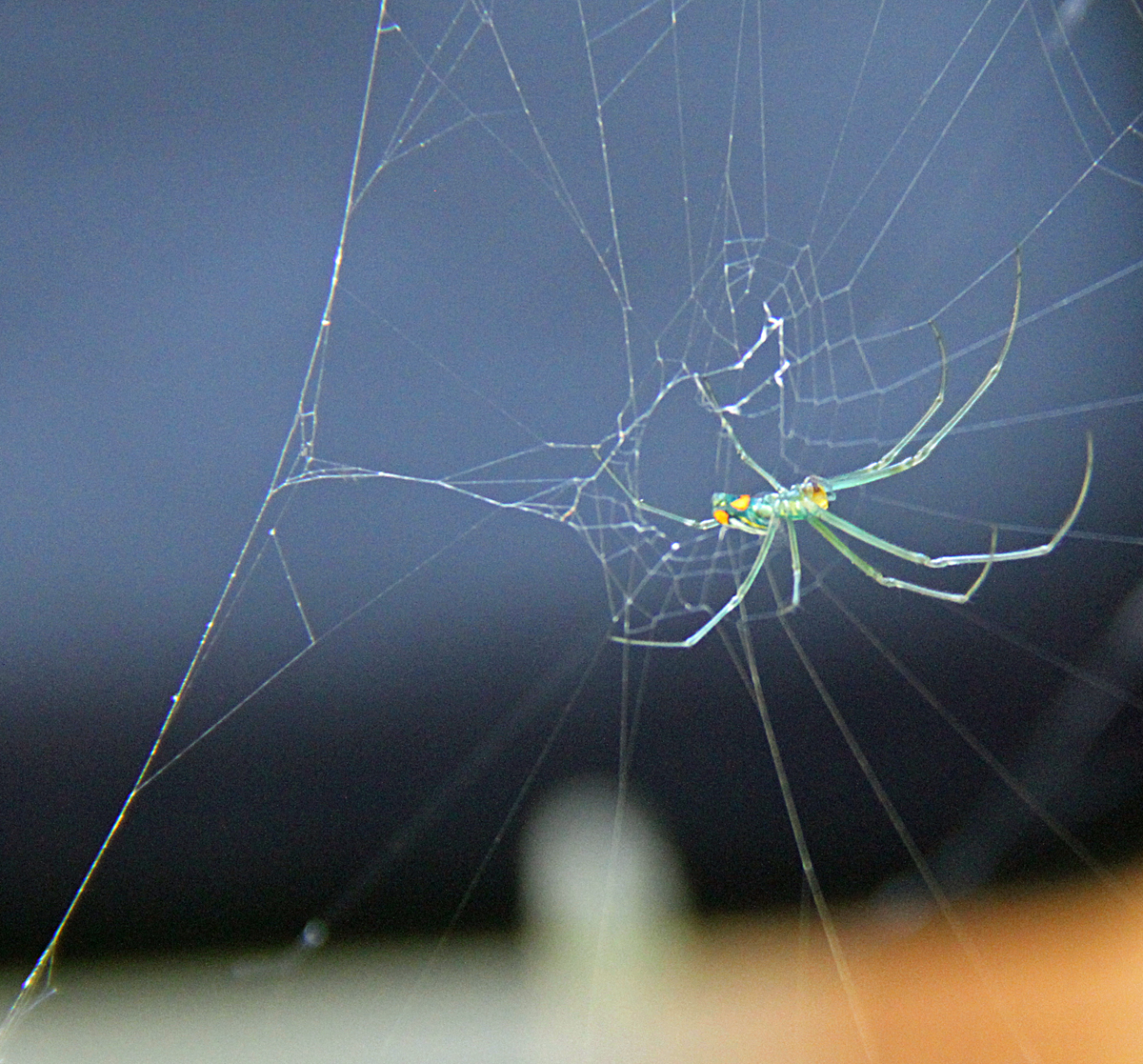 7407---9-13-14  Hannah's Spider
