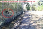 2287---2-11-15 Tree removed & laid out on stream bank