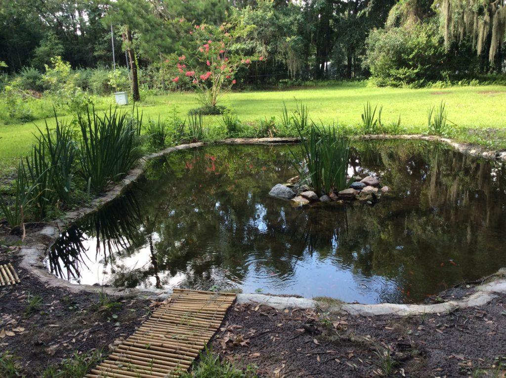 Fish pond w.crepemyrtle