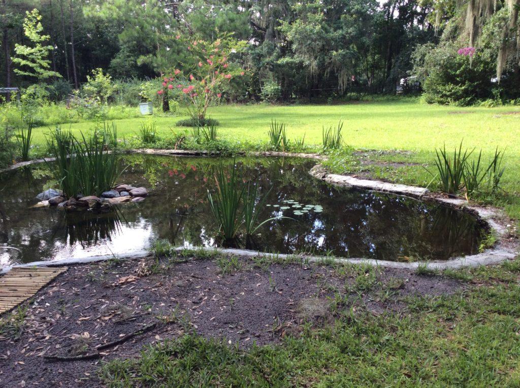 Pond w. island