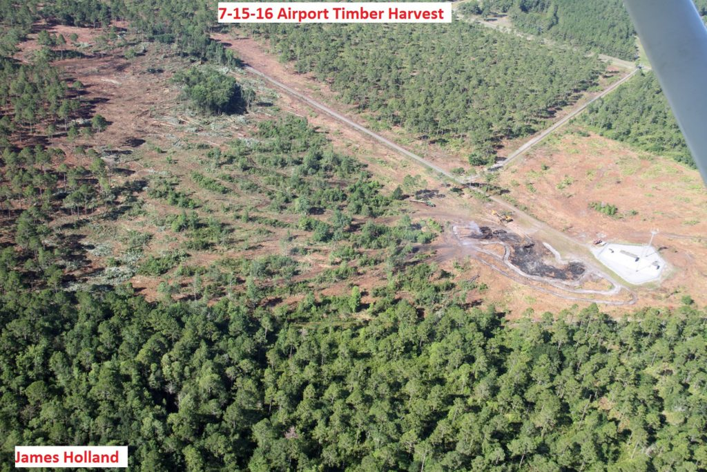 0337---7-15-16 Airport Timber Harvest