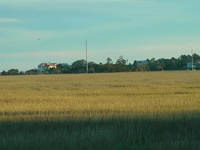 golden-marsh