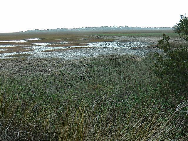 Hannah's Marsh