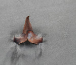 0117 A leaf in the sand