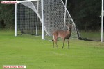 1563---11-28-15 The Goal Keeper