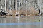 1652---A swamp scene