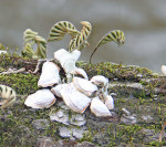2734---2-22-15 Mushrooms on the South Altamaha River