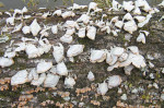 2742---2-22-15 Mushrooms on the South Altamaha River