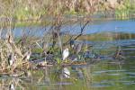 2899 Wading Birds Resting