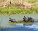 3081 Turtles