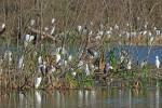 3249 Wading Birds Resting