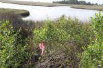 3261---3-20-15 Marsh & Marsh Buffer Flagged (Lanier Bridge)