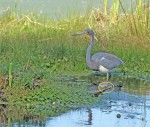 3777 The Heron and the frog(2)