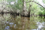 4096 Swamp Scene
