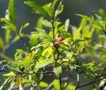 6322 Fruit of the Pondspice