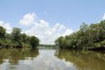 8087 Scene on the Altamaha River