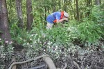 8100---7-9-15 Jim Drake photographing the Sabatia folioso (Lewis Creek)