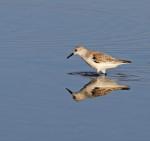 9969 Shore bird mirror