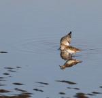 9974 Shore bird reflections
