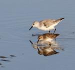 9975 Shore bird mirror