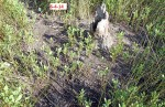 #6-3825---6-14-14 Rollins Compost trail in the marsh
