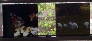 Am Lady butterfly & storks